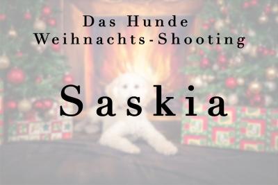 Geschützt: Hunde Saskia