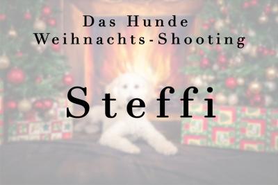 Geschützt: Hunde Steffi